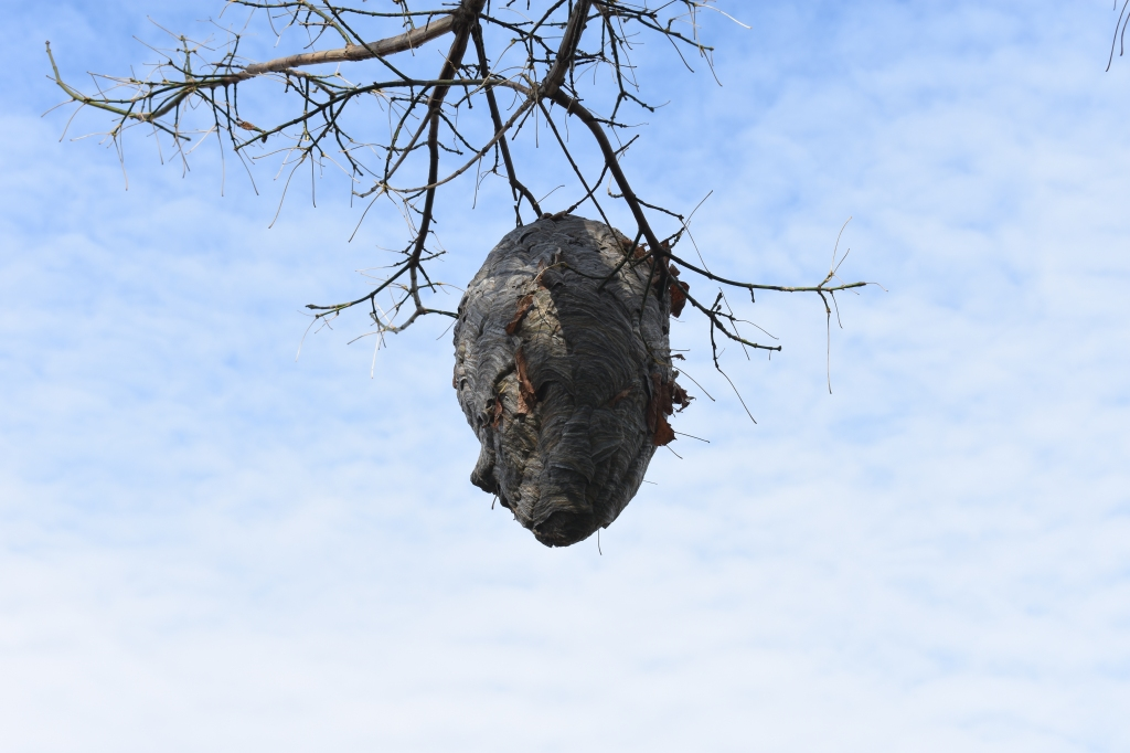 A nest in a tree  Description automatically generated